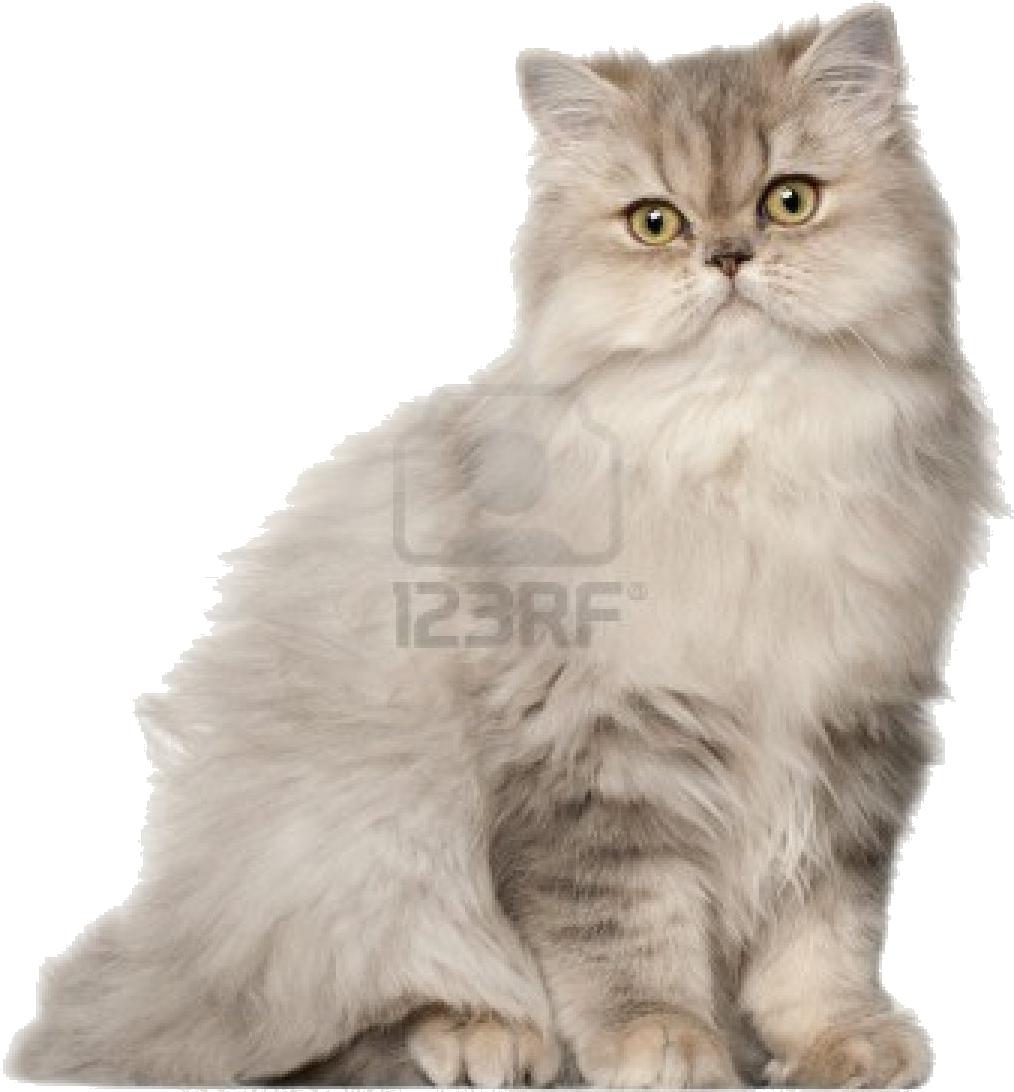 Croquette pour chat strilis pas cher cool croquette kg - Croquettes chat sterilise pas cher ...