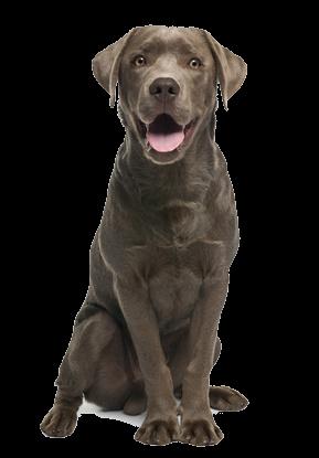 du bio pour nos chiens chats animalerie en ligne bio alimentation chien chat soins chien. Black Bedroom Furniture Sets. Home Design Ideas