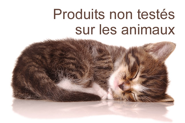 no-test-animaux